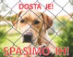 Protest for Dubrovnik's Dogs