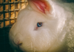 Cosmetic ingredients are still being tested on animals!