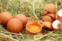 eggs, salmonela