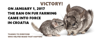Victory for chinchillas