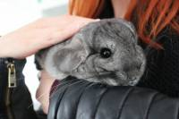Adopted chinchillas 13 [ 64.93 Kb ]