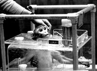 Vivisection 23 (monkey) [ 33.54 Kb ]
