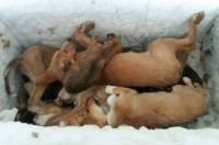 Psi u Prači