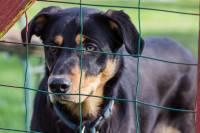 Napušten pas u skloništu