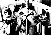 Vivisection 33 (cat) [ 28.04 Kb ]
