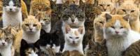 Puno mačaka