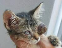 Rijeka, Udruga Vis Vitalis: Ostavljeno sedmero mačića. Dehidrirani, izgladnjeli i s teškim infekcijama očiju. Samo dvoje je preživjelo. Slijepi su.