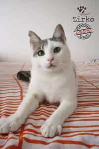 Mačak Zirko iz Prave šape