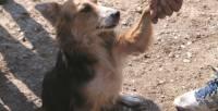Pas romska naselja