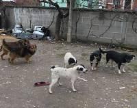 abandoned dogs in Medjimurje county