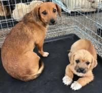 Psi iz romskih naselja