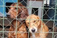 Psi iz azila Prijatelji