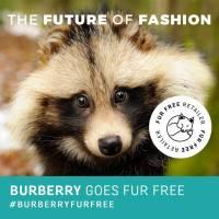 Burberry drops fur
