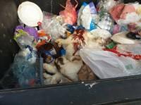 Dead cats in a garbage bin