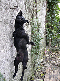 11/23/2005 - Unknown sadist hung a dog in Pula