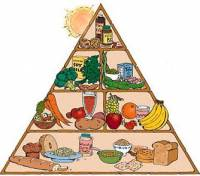 Food pyramid [ 24.30 Kb ]