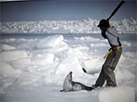 HSUS: Bearing Witness: Canada's 2005 Seal Hunt