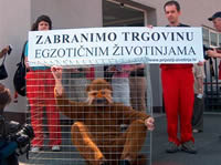 Against Exotic Animals Trade