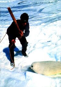 Seal hunt - Sealer 2 [ 98.80 Kb ]