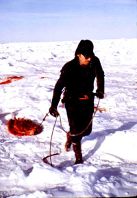 Seal hunt - Sealer Dragging Pelts [ 87.40 Kb ]