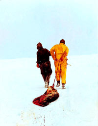 Seal hunt - foasealers dragging seal [ 71.26 Kb ]