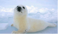 Seal - source: stopthecanadiansealhunt@groups.care2.com [ 29.62 Kb ]