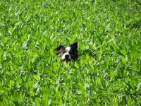 Dog in a grass [ 164.36 Kb ]