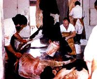 Klanje krave [ 23.42 Kb ]