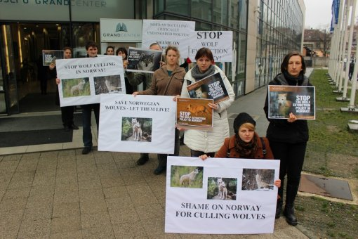 Demo against the massive wolf culling in Norway [ 255.70 Kb ]