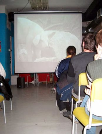 Why Veg? video projection 2