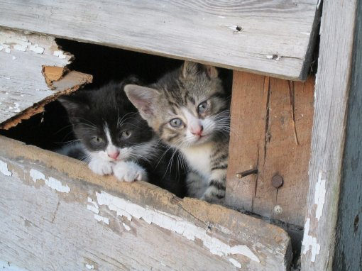 abandoned kittens [ 791.44 Kb ]