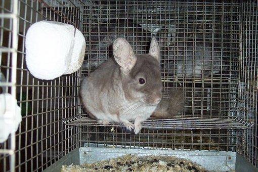 348edd9a80b Prijatelji životinja - Razlozi za zabranu uzgoja životinja za krzno ...