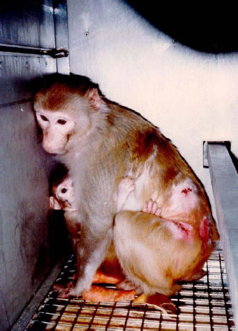 Animal experimentation research paper