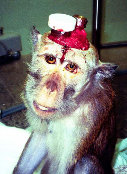 AFC - The Ethical Argument Against Vivisection