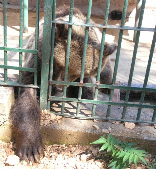 Bear in the Split ZOO