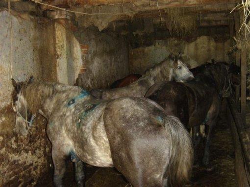 Konji u Bregani 4 [ 41.46 Kb ]