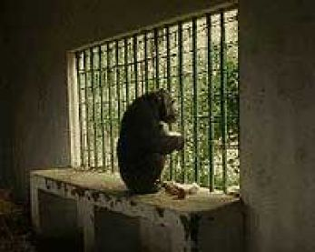 zoos are prisons for animals essay Miscellaneous term papers  (zoos are prisons essay)  (zoos: pitiful prisons) the animals are closely confined,.