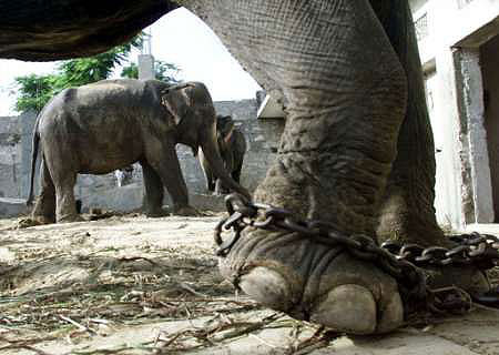 Zoos are animal prisons essay checker
