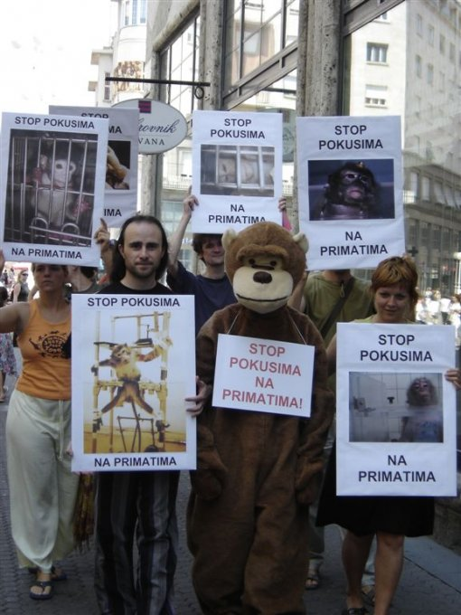 Stop experiments on primates 4