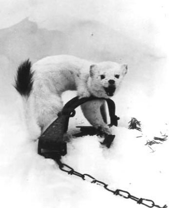 online upoznavanje srebrna lisica Badoo web mjesto za upoznavanje