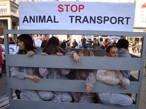 Demo against animal transport 2009 [ 91.72 Kb ]