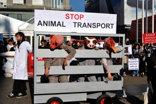 Demo against animal transport 2010  15 [ 225.10 Kb ]