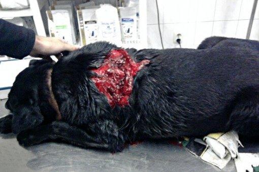 Black Dolphin Prison Dogs \x3cb\x3eblack dolphin prison dogs\x3c/b\x3e ...