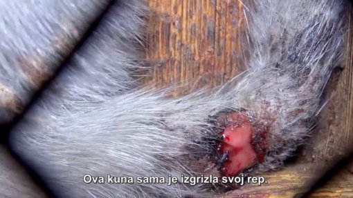 Czech Republic against fur [ 144.54 Kb ]