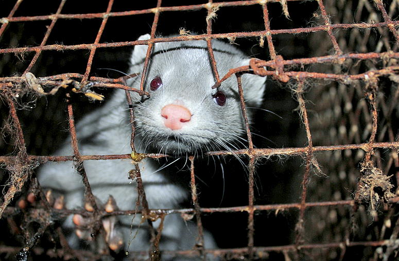 an argument in favor of banning the use of animal fur Some have hailed the new law as an important victory for animal rights in this column, i want to explore and banned the sale of new fur in the city.