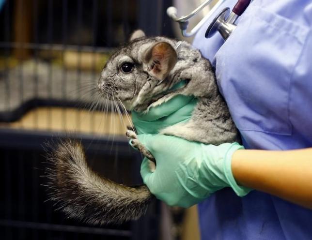 412112f46ba Prijatelji životinja - Podrške veterinara zabrani