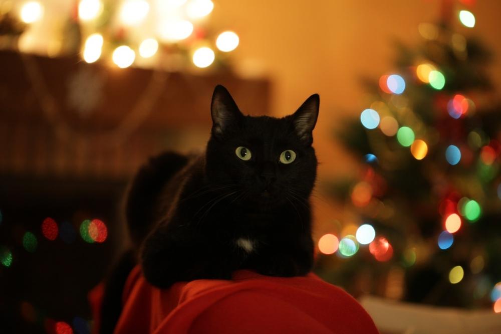 crna maca u uredu