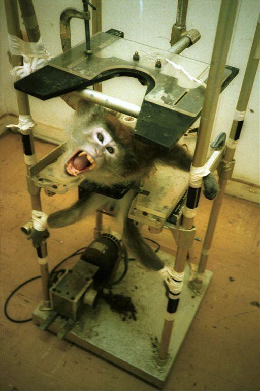 animal testing on makeup. Animal Testing for Science