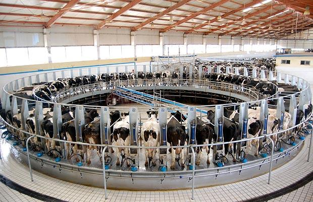 Animal, automatic, box, cattle, cluster, components, cow, cow-house, dairy, dairy-farm, domestic, farm, farmhouse